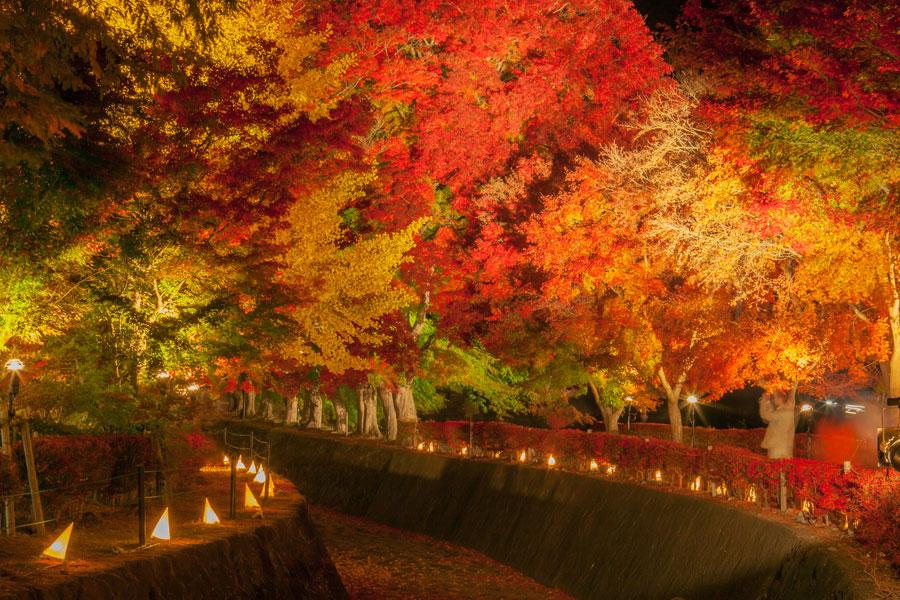 Kawaguchi-ko Autumn Leaves Festival