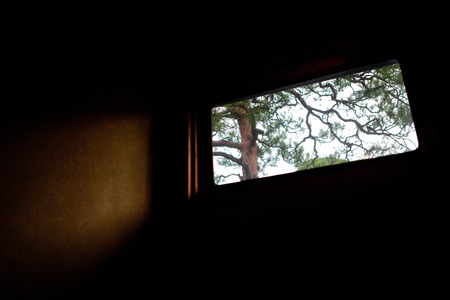 A pine tree casts its shadow into the hall through a window.