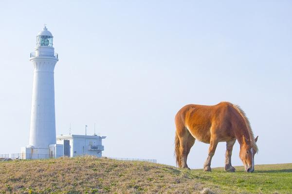 Kandachime: Kuda-kuda liar Tanjung Shiriya