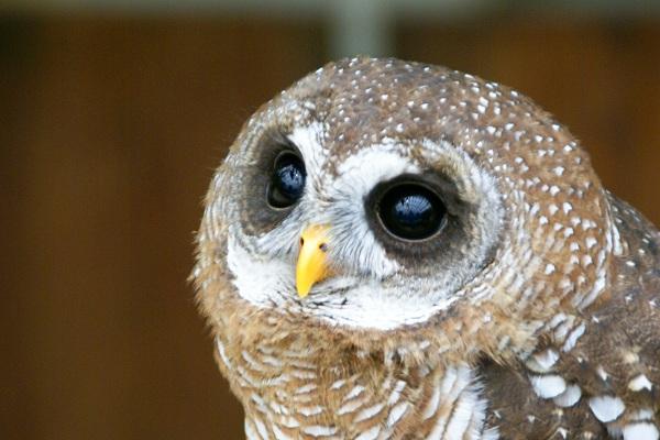 Owl Cafes in Tokyo
