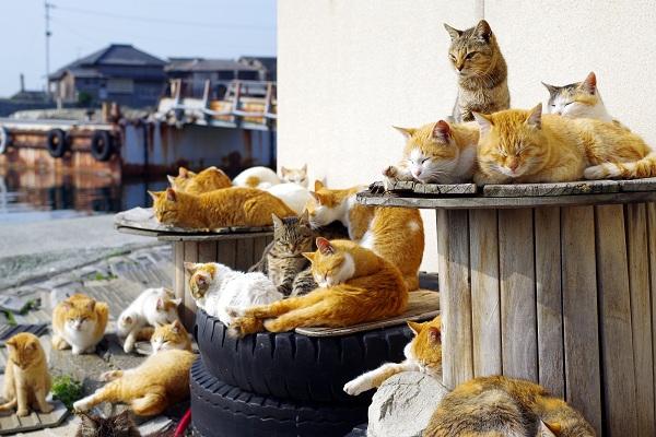 田代島、青島、相島:日本的貓島