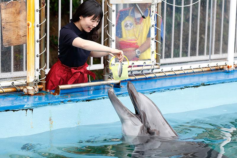 イルカのエサやり