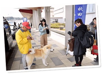 8のつく日は国指定天然記念物の秋田犬がお出迎え♪