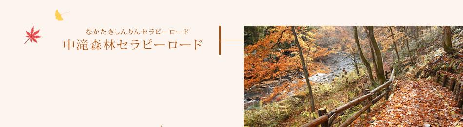中滝森林セラピーロード