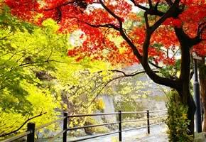 湯瀬渓谷(森林セラピーロード)