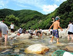 魚のつかみ獲り!夏の川で遊ぼう!