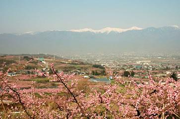 花鳥山一本杉からの眺め