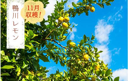 鴨川レモン