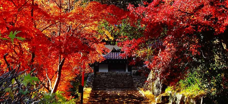 紅葉めぐり