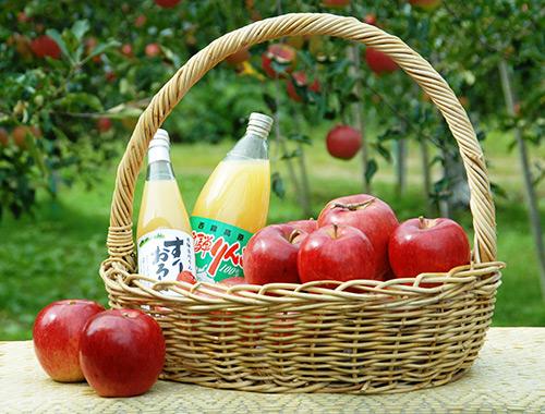 リンゴ狩り(黒内果樹園)