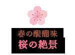 春の醍醐味桜の絶景