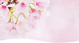 桜のイメージ写真