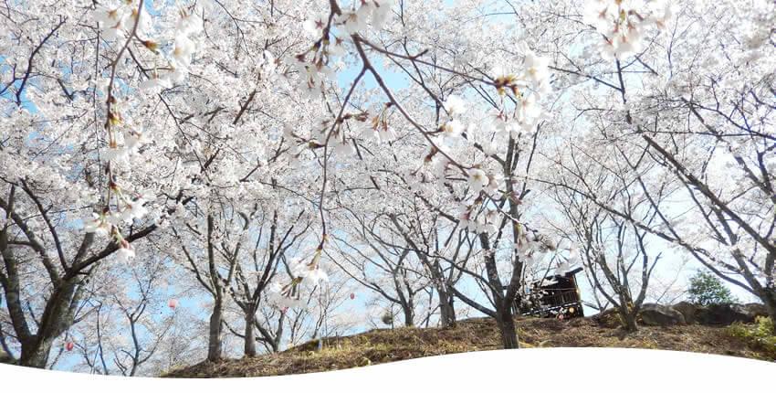 苗木さくら公園(中津川市)