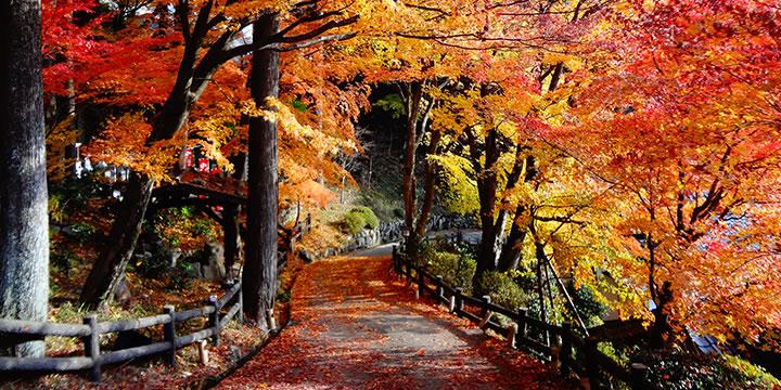 下呂温泉を満喫 ゆったりと秋旅