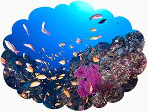 八丈ブルーの海を泳ぐ魚の群れ