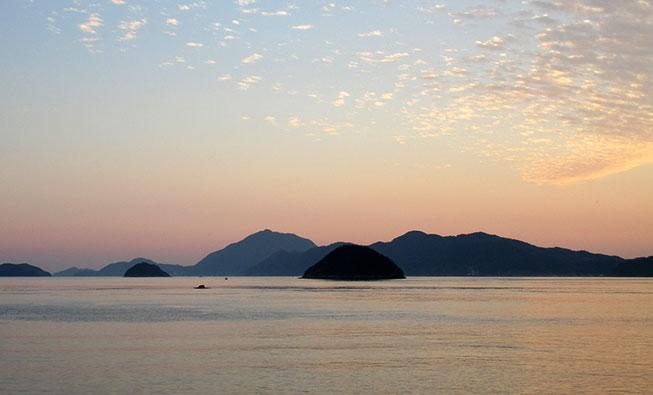大久野島のうさぎ