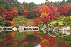 紅葉(三景園)