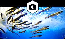 日本一と世界初がある水族館