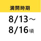満開時期 8/13〜 8/16頃