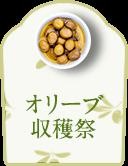 オリーブ 収穫祭