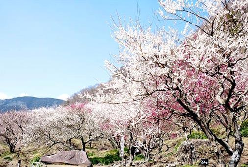 「梅の宴」開催詳細