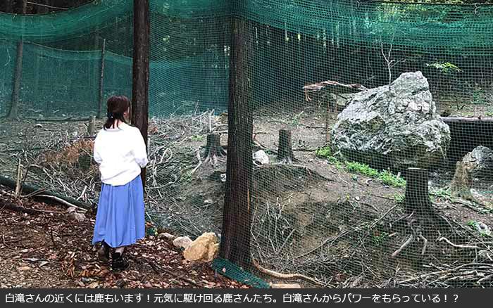 「白滝さん」滝行体験!