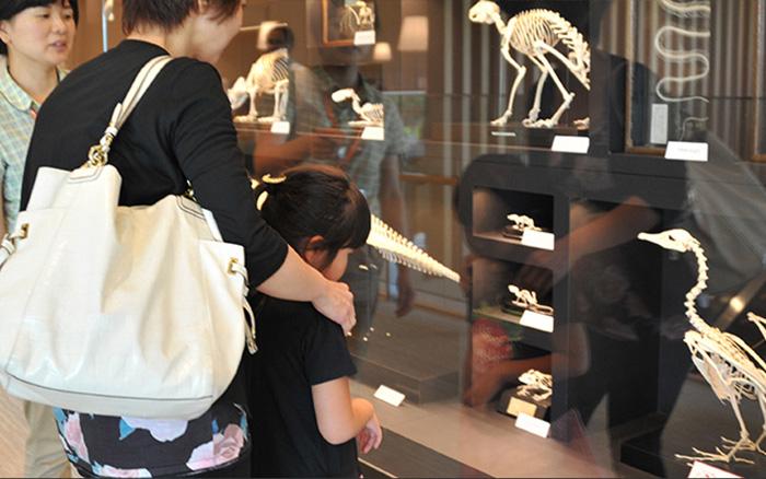 夏休み自由研究-博物館ではたらく-