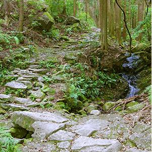 尾鷲セラピスト 熊野古道・馬越峠(尾鷲市)