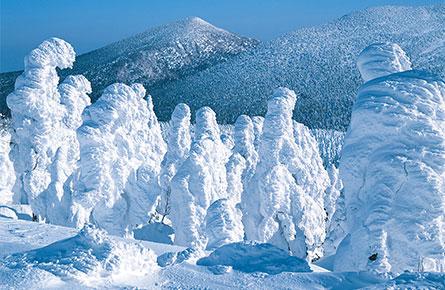みやぎ蔵王の樹氷