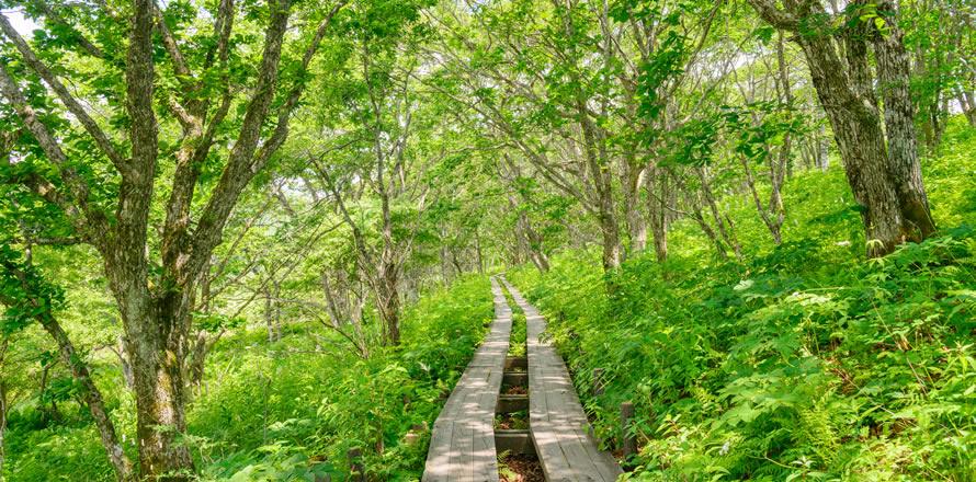 ビーナスライン~八島湿原