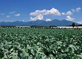 八ヶ岳高原野菜