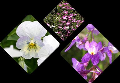 北アルプスと花の丘