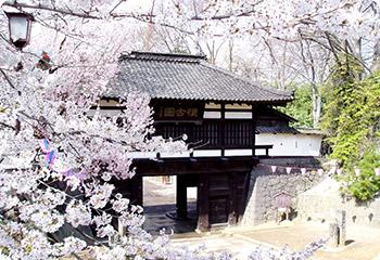 桜の懐古園