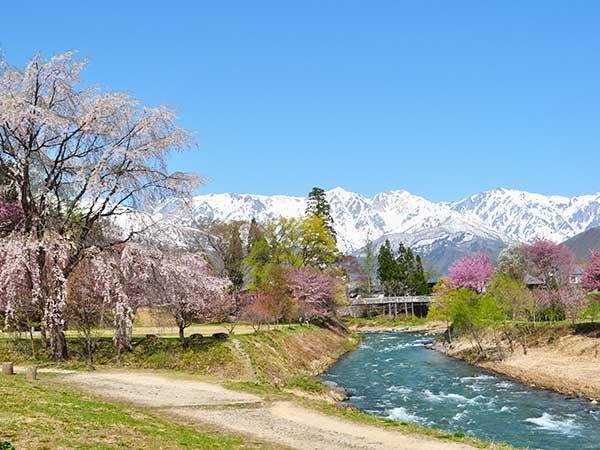 春の花は彩り豊か「桜、カタクリ、水芭蕉」