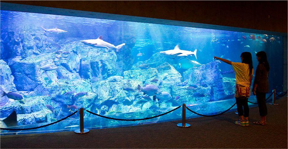 大分マリーンパレス水族館「うみたまご」【大分市】