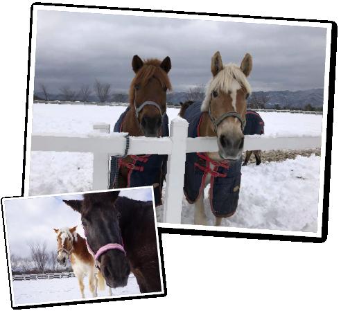 雪上乗馬(蒜山ホースパーク)