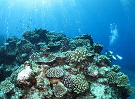 珊瑚が美しい海中