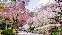 [PR] おおつの春旅