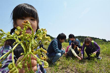 稲取細野高原 山菜狩り