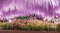 春の栃木県へ、魅力再発見の旅