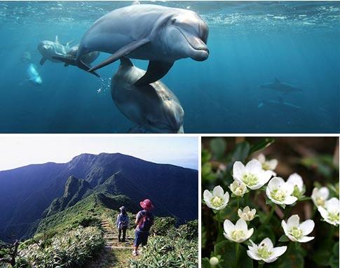 御蔵島の海遊び&山歩き