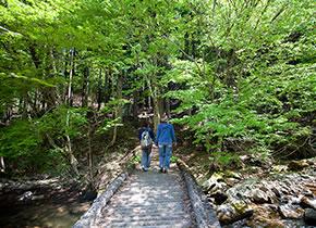 森林セラピー(智頭町)