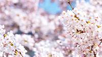 きれいでおいしい!春の熊野古道