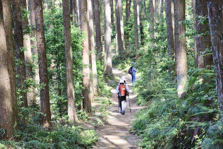 熊野古道でウォーキング