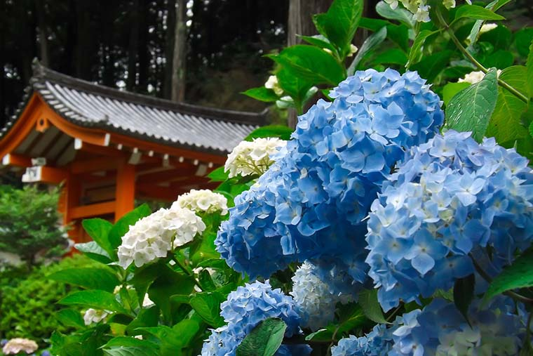 三室戸寺(みむろとじ)