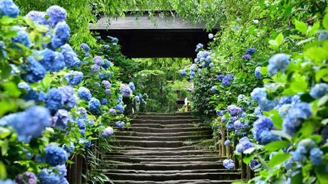 2019年あじさい祭りも!雨が似合う「紫陽花の名所」37選