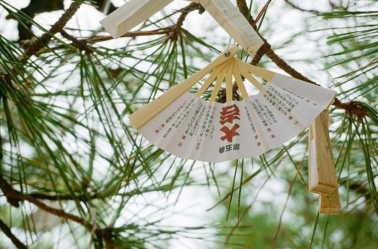 智恩寺のすえひろ扇子おみくじは境内の松の木に結びつけるのが習わし
