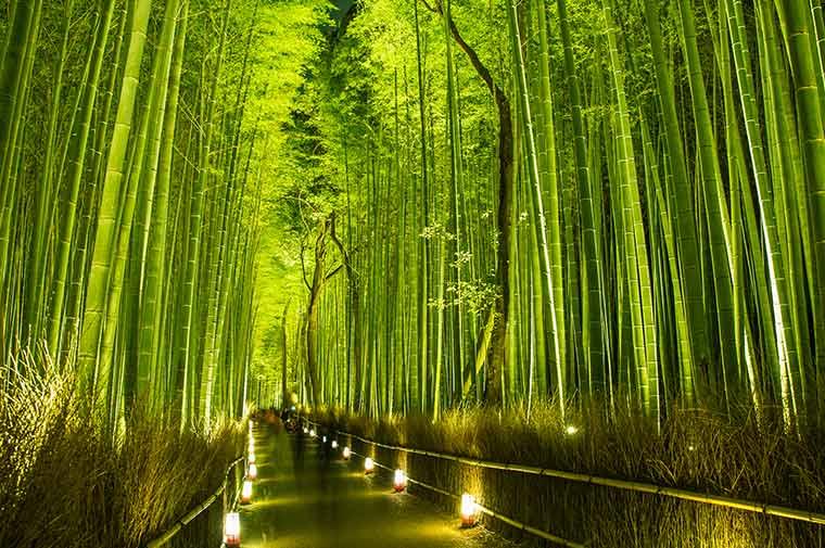 嵯峨野 竹林の小径