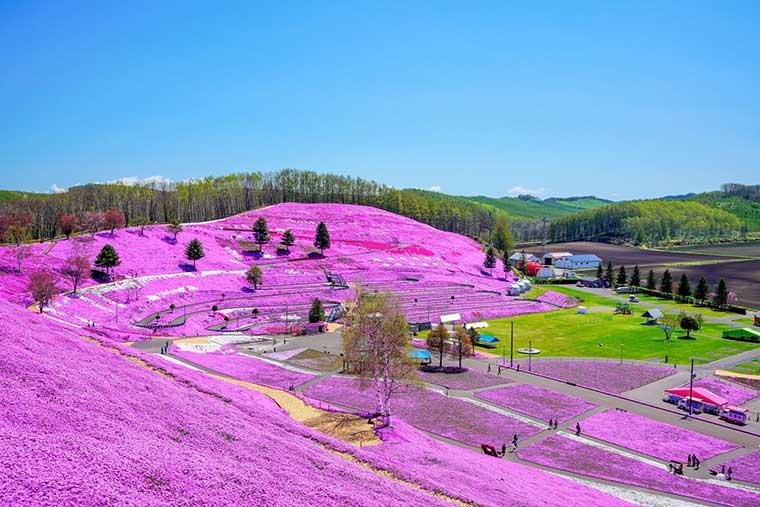 ひがしもこと芝桜公園