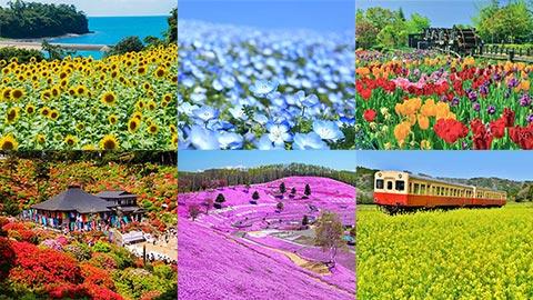 【全国】フォトジェニックな花畑63選!今、見頃の花をエリア別にチェック!